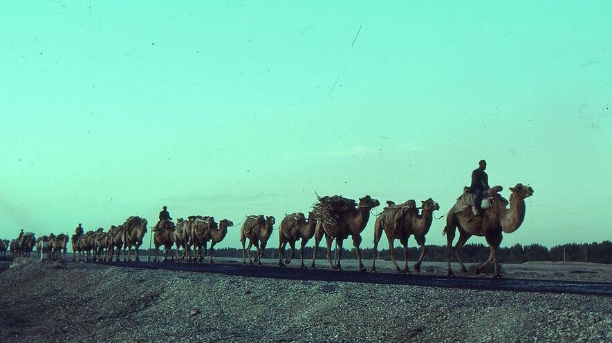 Newsela - Trade Goods, and Ideas, Travel the Silk Roads