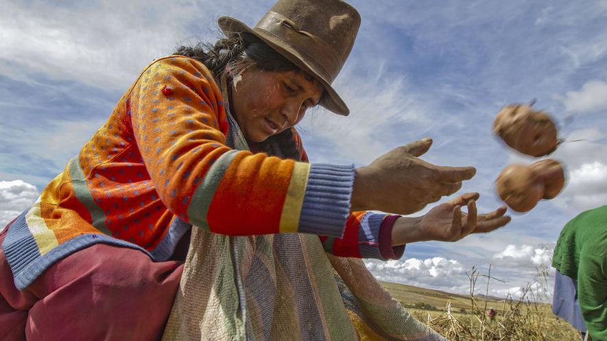 Newsela Perú Protege Sus Cultivos Con La Ayuda De Las