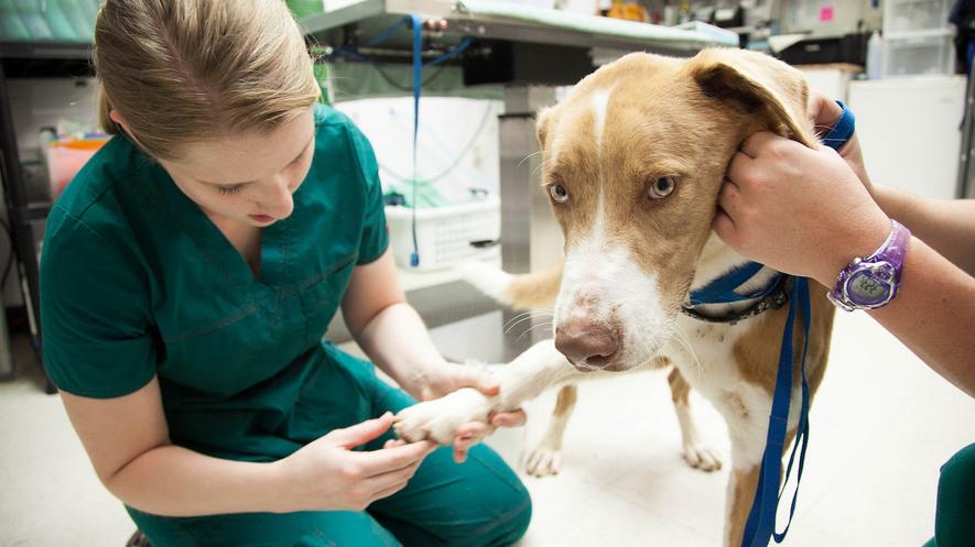 Newsela Dream Jobs Veterinary Technician