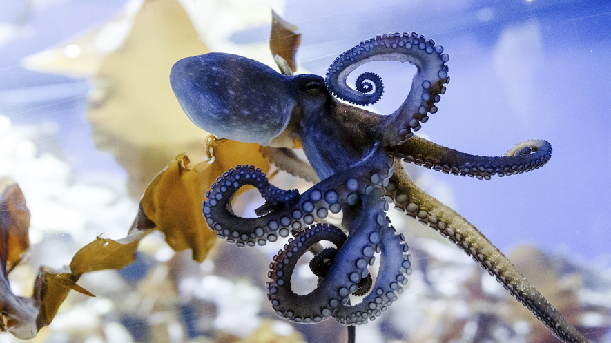 Poetry in addition wonderworldtoy furthermore 10 Free Online Tools For Teaching And Learning likewise Who Is Your Target Market as well Octopus Camouflage Invention. on learning to read