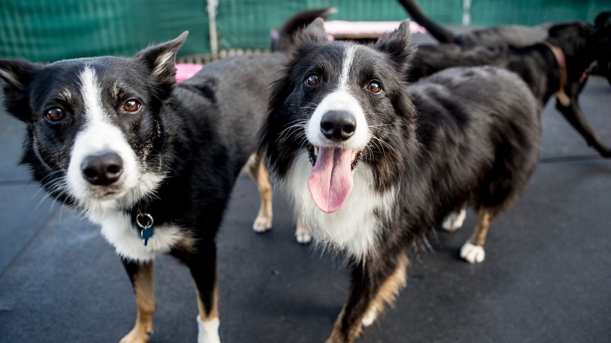 newsela australian dogs trained to sniff out endangered species