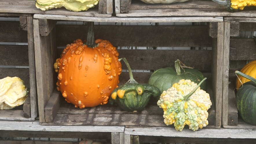 Newsela The Science Behind Decorative Gourd Season