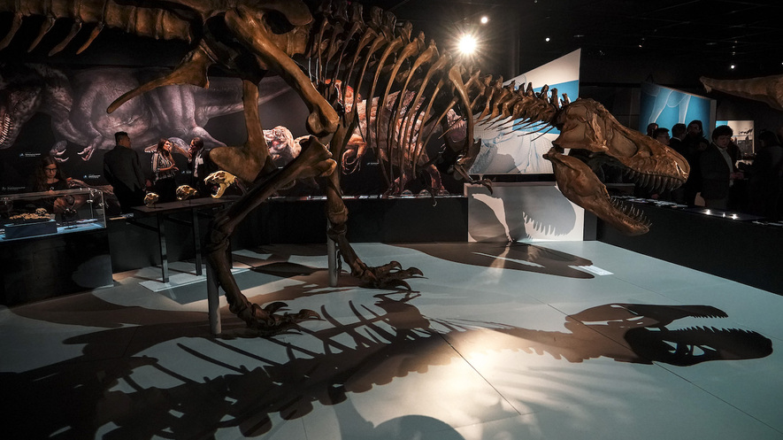 Newsela   Would the de-extinction of species always turn ...